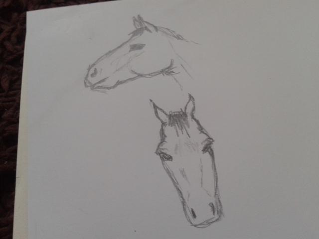 Horse's Head Doodle
