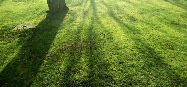Trees Shadows